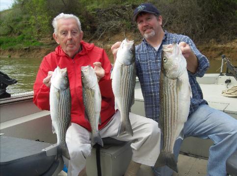 Sacramento river fishing guide report sacramento fishing for Feather river fishing report