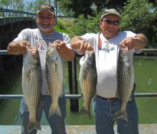 Sacramento river fishing guide report sacramento fishing for Fishing report delta